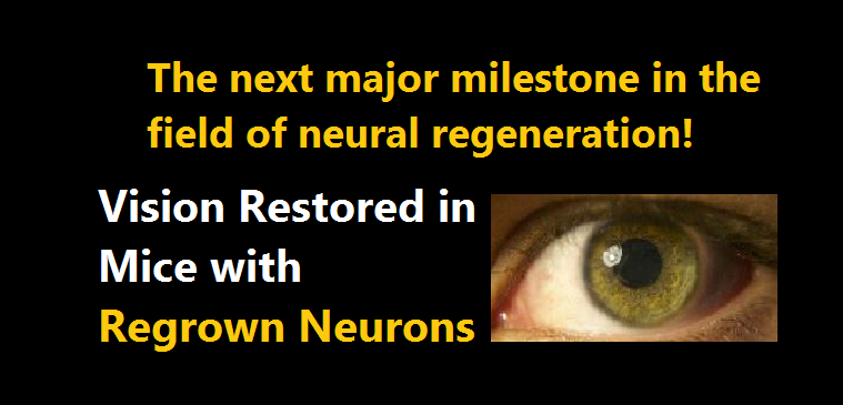 Regrown Neurons in mice