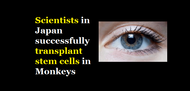 Scientists in Japan successfully transplant stem cells in Monkeys
